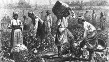 Cotton Picking in Georgia