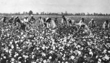 Cotton, the Engine of the Southern Economy